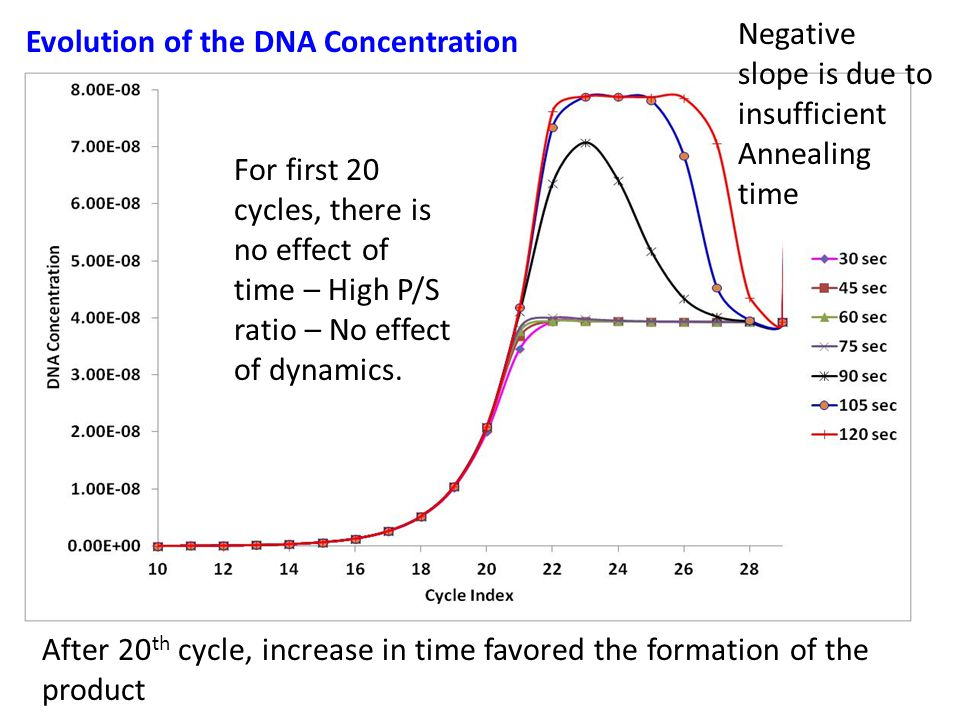 Evolution of the DNA Concentration For first 20 cycles, there is no effect of time – High P/S ratio – No effect of dynamics.