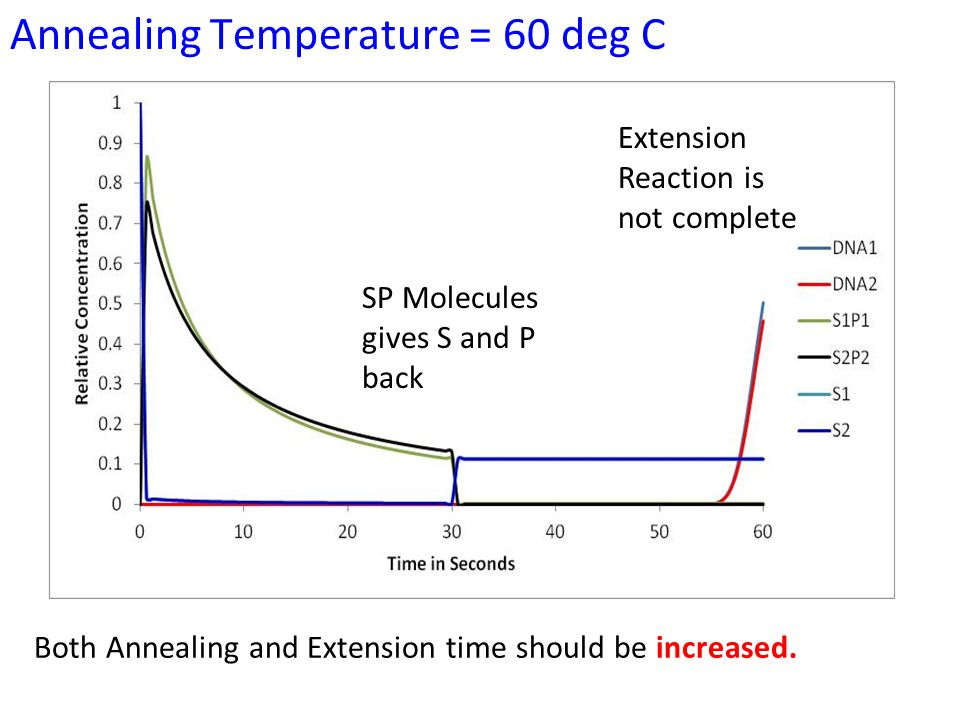 Annealing Temperature = 60 deg C Extension Reaction is not complete SP Molecules gives S and P back Both Annealing and Extension time should be increased.