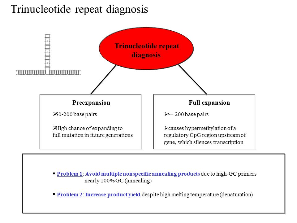 Trinucleotide repeat diagnosis Trinucleotide repeat diagnosis  Problem 1: Avoid multiple nonspecific annealing products due to high-GC primers nearly 100% GC (annealing)  Problem 2: Increase product yield despite high melting temperature (denaturation) PreexpansionFull expansion  50-200 base pairs  High chance of expanding to full mutation in future generations  >= 200 base pairs  causes hypermethylation of a regulatory CpG region upstream of gene, which silences transcription