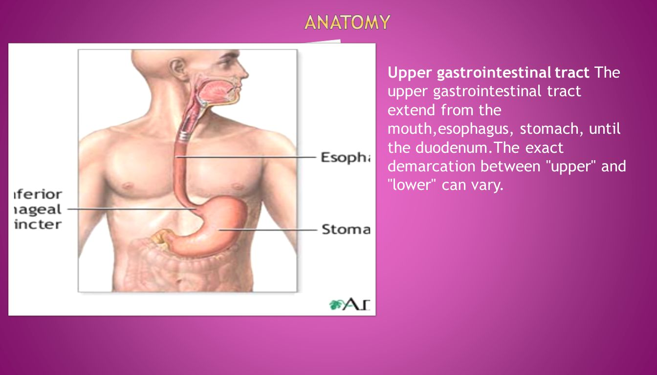 Upper gastrointestinal tract The upper gastrointestinal tract extend from the mouth,esophagus, stomach, until the duodenum.The exact demarcation betwe
