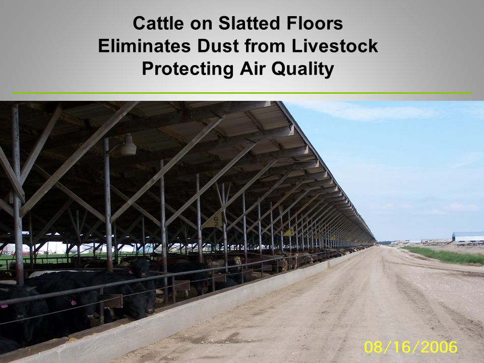 Cattle on Slatted Floors Eliminates Dust from Livestock Protecting Air Quality
