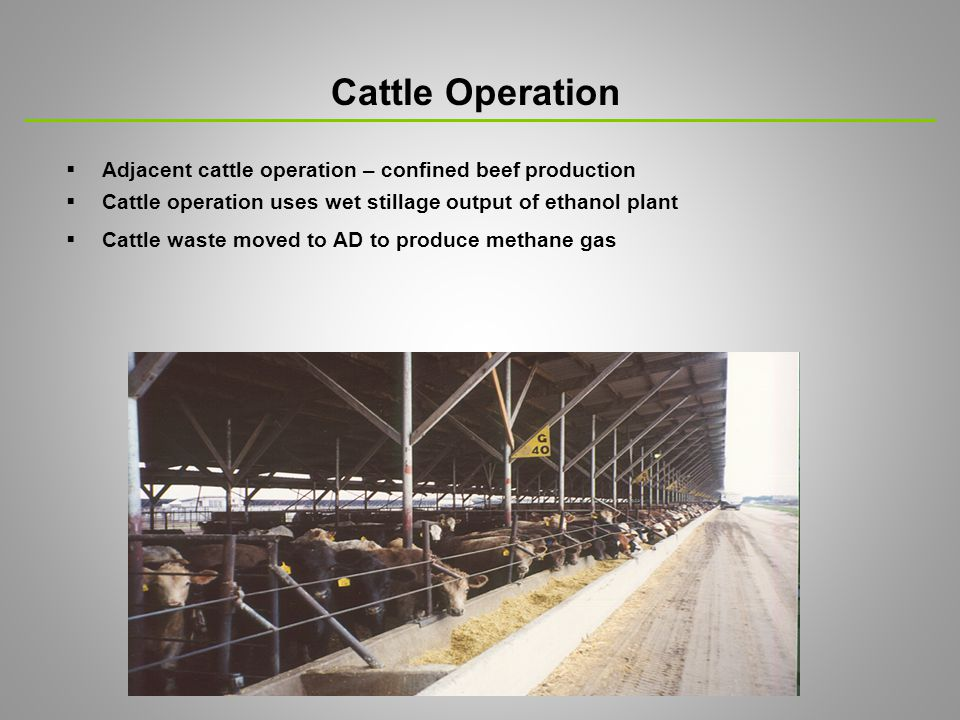  Adjacent cattle operation – confined beef production  Cattle operation uses wet stillage output of ethanol plant  Cattle waste moved to AD to produce methane gas Cattle Operation