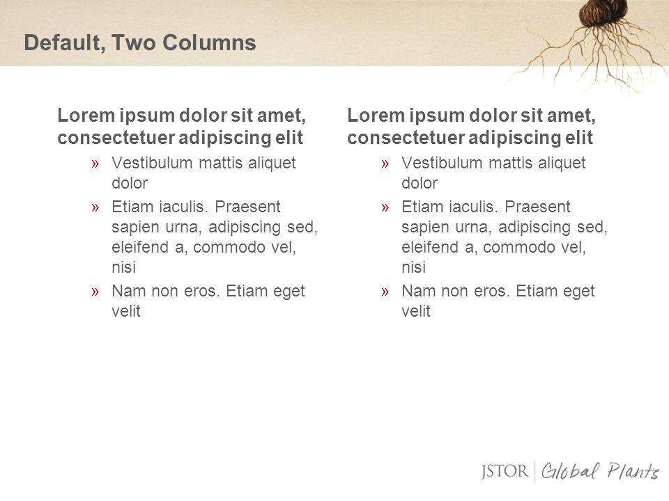 Lorem ipsum dolor sit amet, consectetuer adipiscing elit »Vestibulum mattis aliquet dolor »Etiam iaculis.