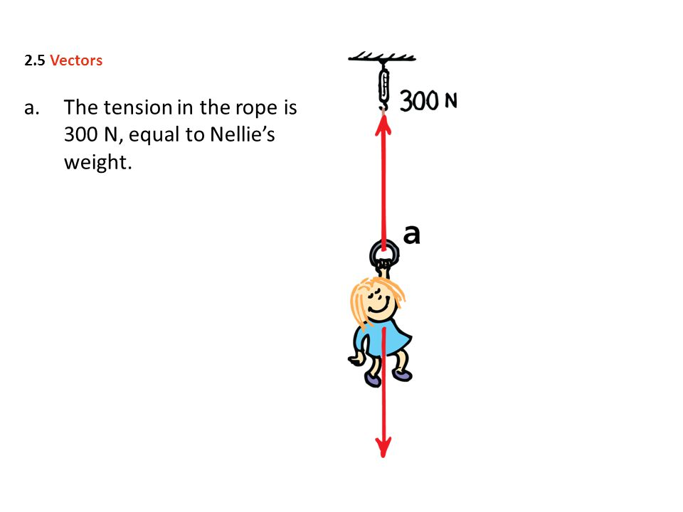 a.The tension in the rope is 300 N, equal to Nellie's weight. 2.5 Vectors
