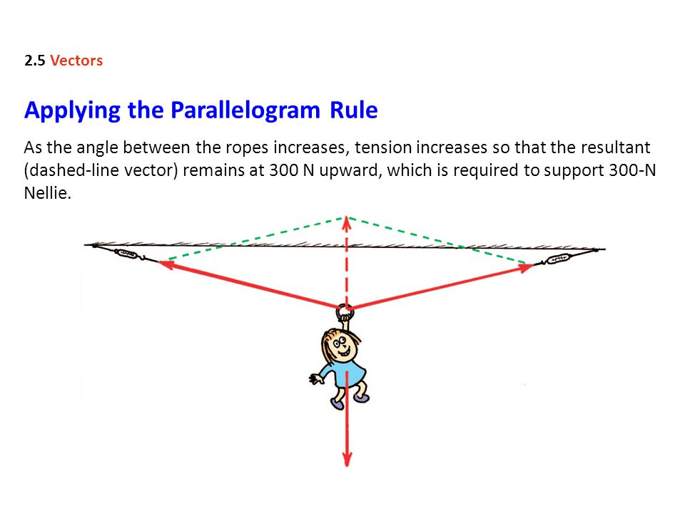 As the angle between the ropes increases, tension increases so that the resultant (dashed-line vector) remains at 300 N upward, which is required to support 300-N Nellie.