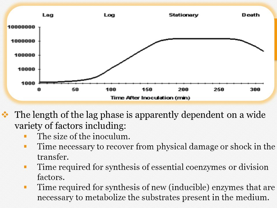 2)Exponential (log) Phase.