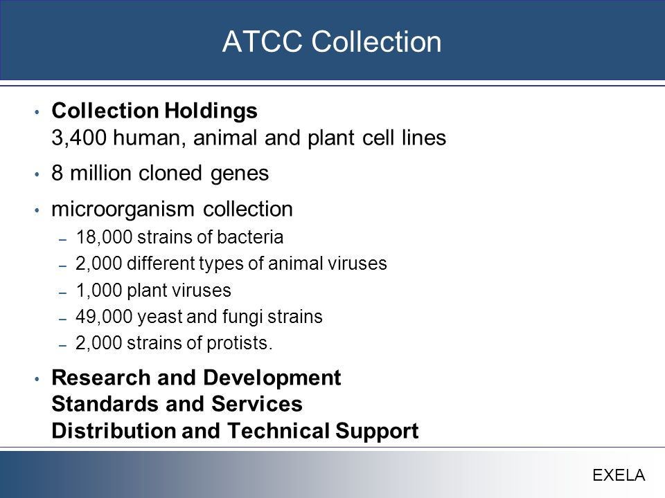 EXELA ATCC Collection Collection Holdings 3,400 human, animal and plant cell lines 8 million cloned genes microorganism collection – 18,000 strains of bacteria – 2,000 different types of animal viruses – 1,000 plant viruses – 49,000 yeast and fungi strains – 2,000 strains of protists.