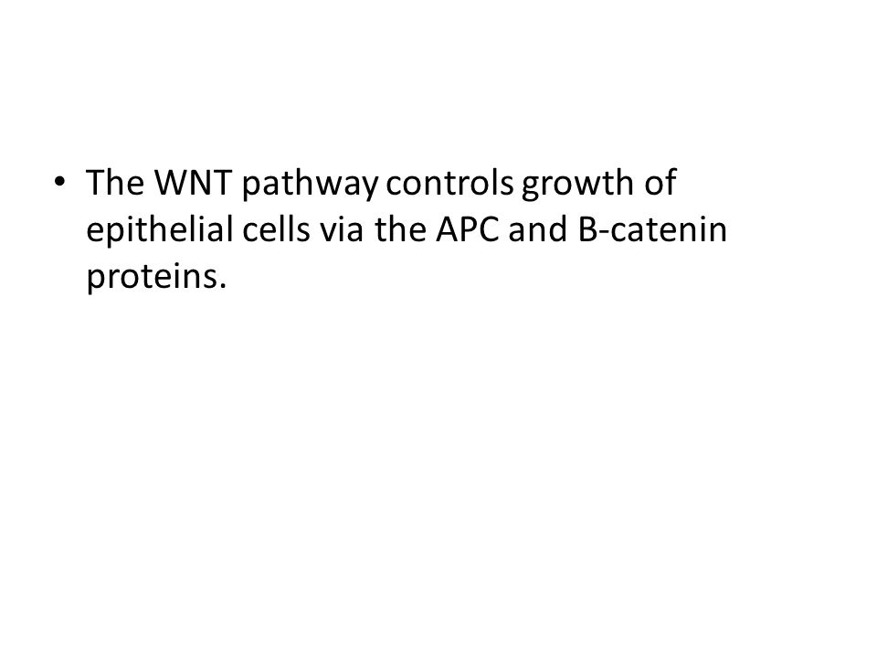 The WNT pathway controls growth of epithelial cells via the APC and B-catenin proteins.