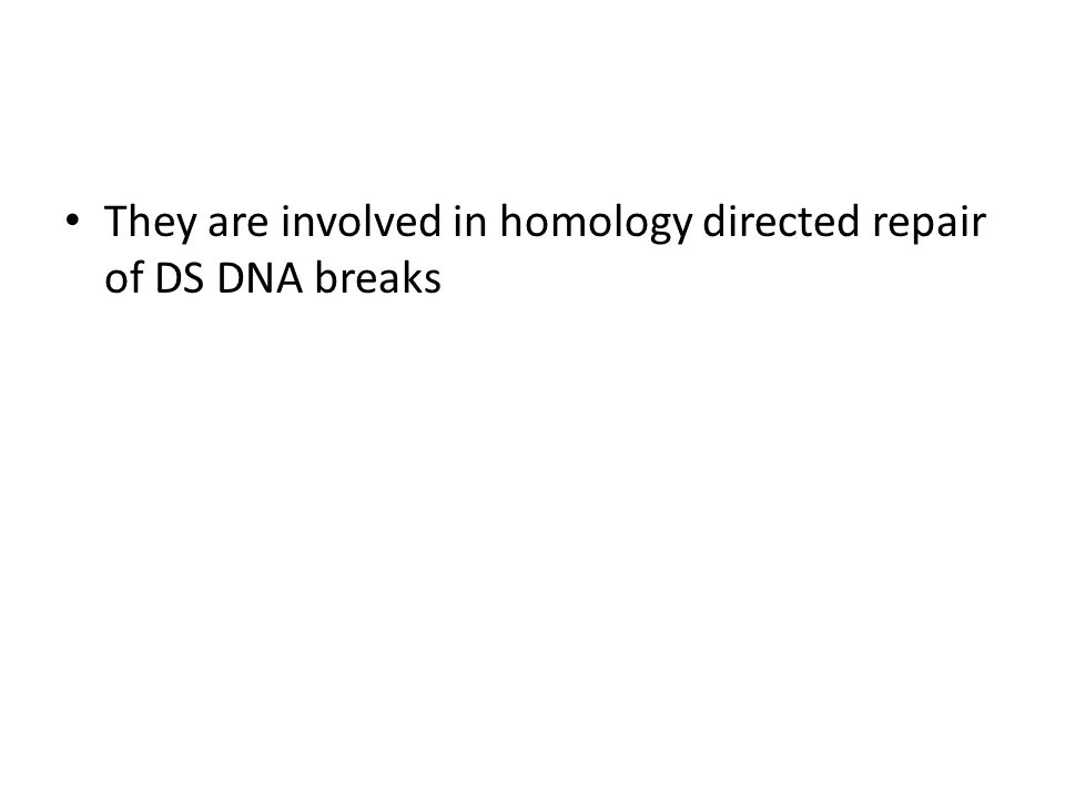 They are involved in homology directed repair of DS DNA breaks