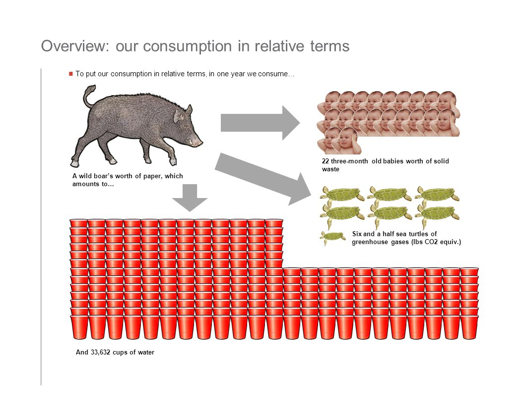 Overview: our consumption in relative terms To put our consumption in relative terms, in one year we consume… A wild boar's worth of paper, which amounts to… 22 three-month old babies worth of solid waste Six and a half sea turtles of greenhouse gases (lbs CO2 equiv.) And 33,632 cups of water