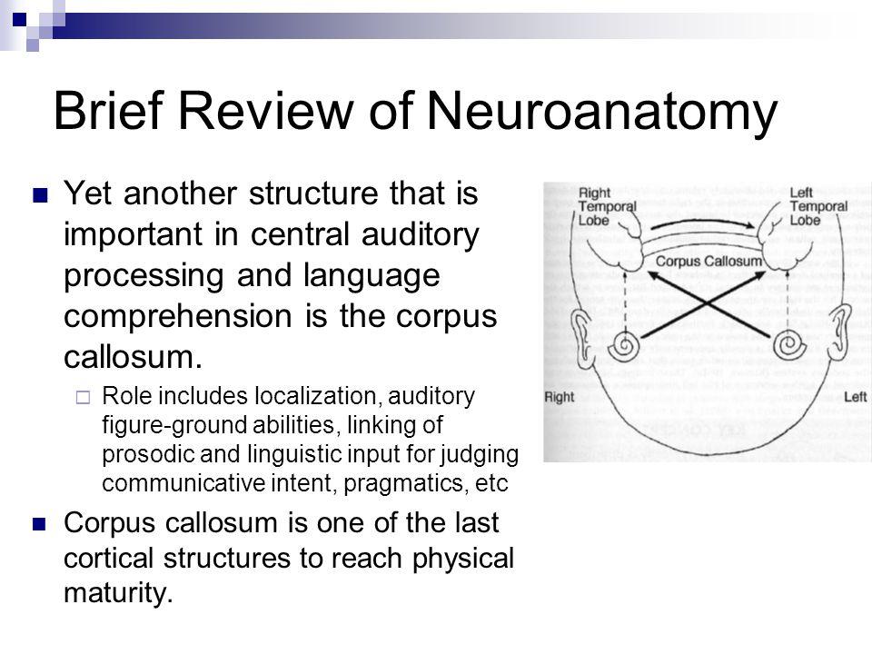 Brief Review of Neuroanatomy