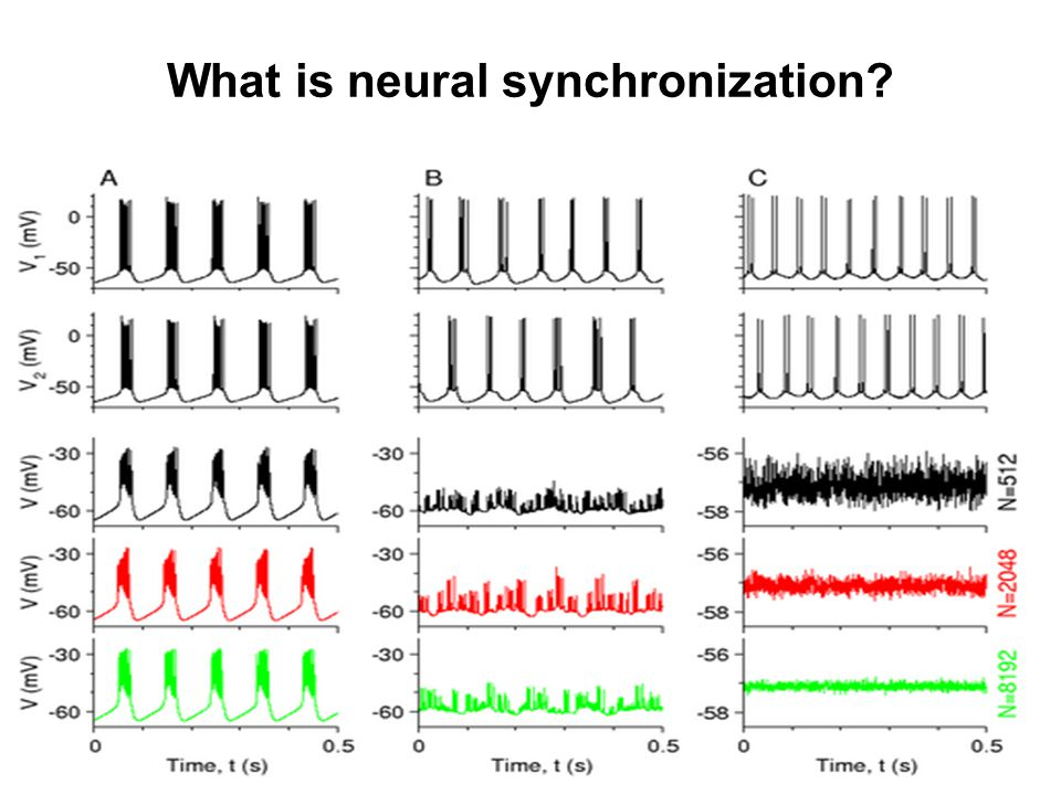 What is neural synchronization?