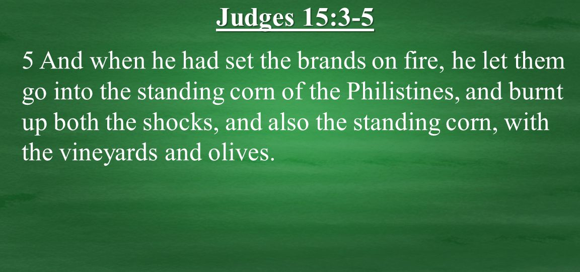 5 And when he had set the brands on fire, he let them go into the standing corn of the Philistines, and burnt up both the shocks, and also the standing corn, with the vineyards and olives.