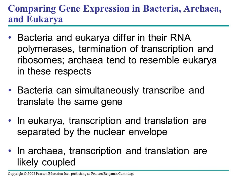 Comparing Gene Expression in Bacteria, Archaea, and Eukarya Bacteria and eukarya differ in their RNA polymerases, termination of transcription and rib