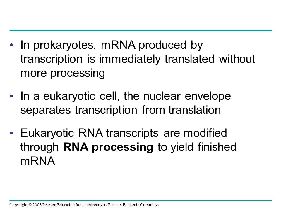 In prokaryotes, mRNA produced by transcription is immediately translated without more processing In a eukaryotic cell, the nuclear envelope separates