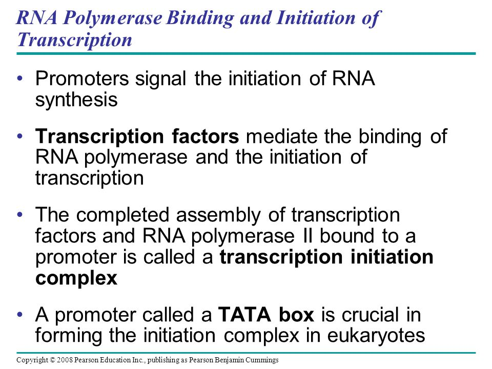 RNA Polymerase Binding and Initiation of Transcription Promoters signal the initiation of RNA synthesis Transcription factors mediate the binding of R