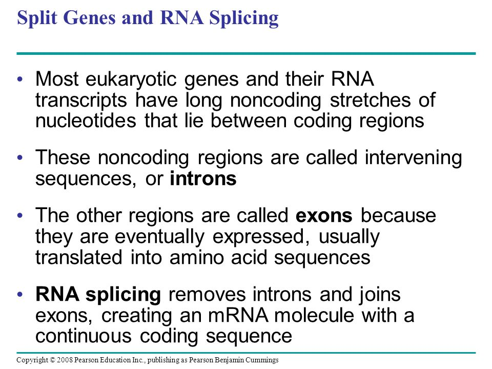 Split Genes and RNA Splicing Most eukaryotic genes and their RNA transcripts have long noncoding stretches of nucleotides that lie between coding regi