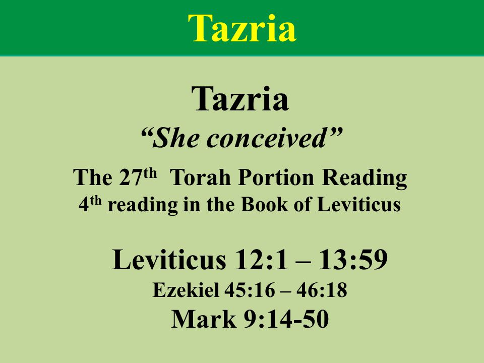 Tazria She conceived The 27 th Torah Portion Reading 4 th reading in the Book of Leviticus Leviticus 12:1 – 13:59 Ezekiel 45:16 – 46:18 Mark 9:14-50 Tazria