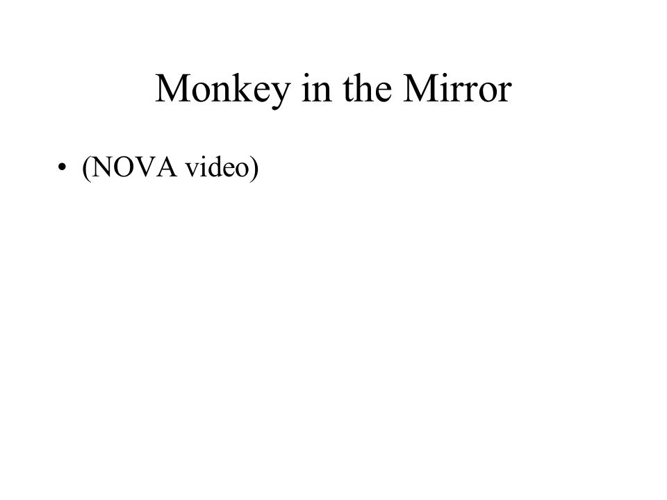 Monkey in the Mirror (NOVA video)