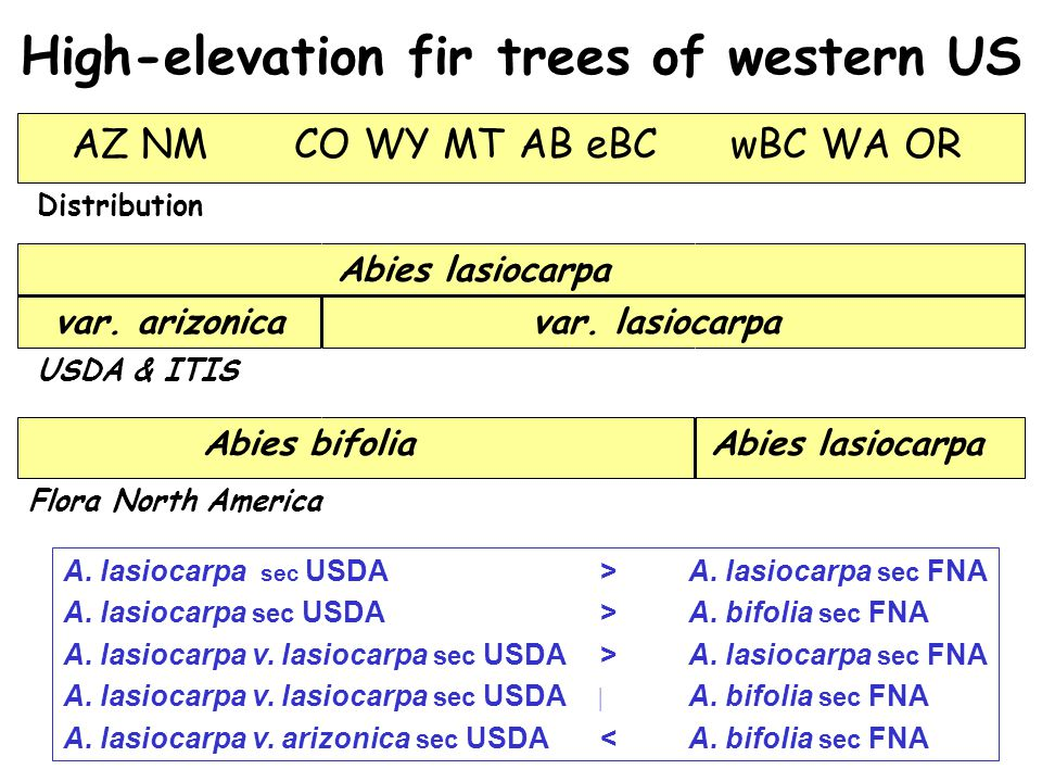 High-elevation fir trees of western US AZ NM CO WY MT AB eBC wBC WA OR var.