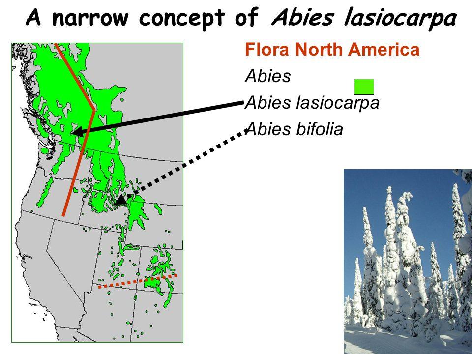 Flora North America Abies Abies lasiocarpa Abies bifolia A narrow concept of Abies lasiocarpa