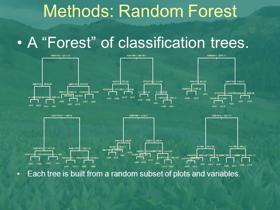 """Methods: Random Forest A """"Forest"""" of classification trees. Each tree is built from a random subset of plots and variables."""