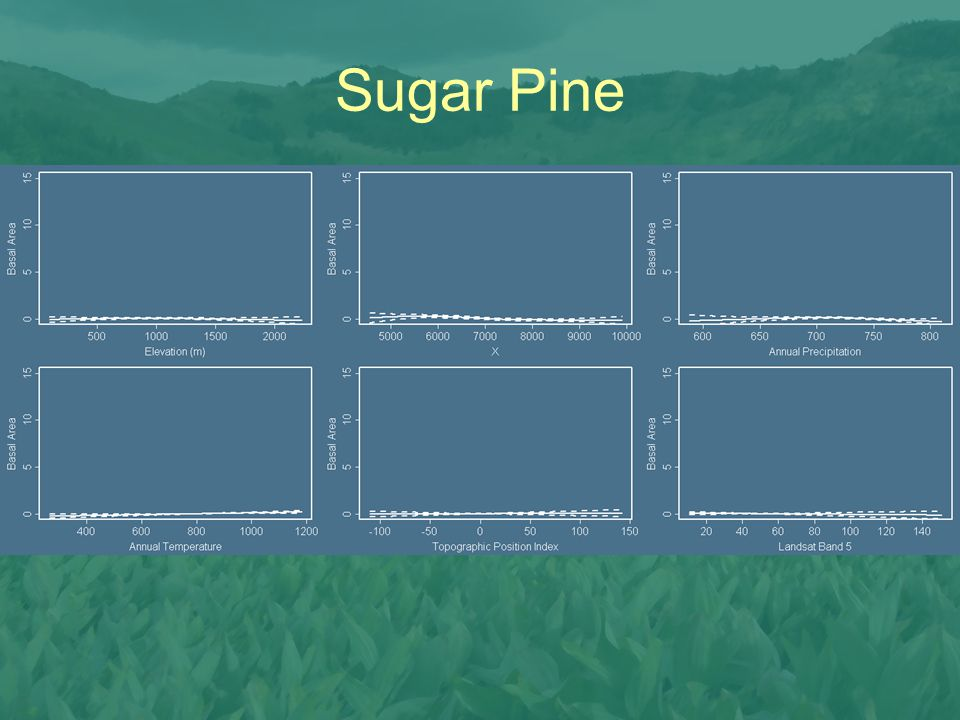 Sugar Pine Spotty distribution, wide elevation range, mostly in the South.
