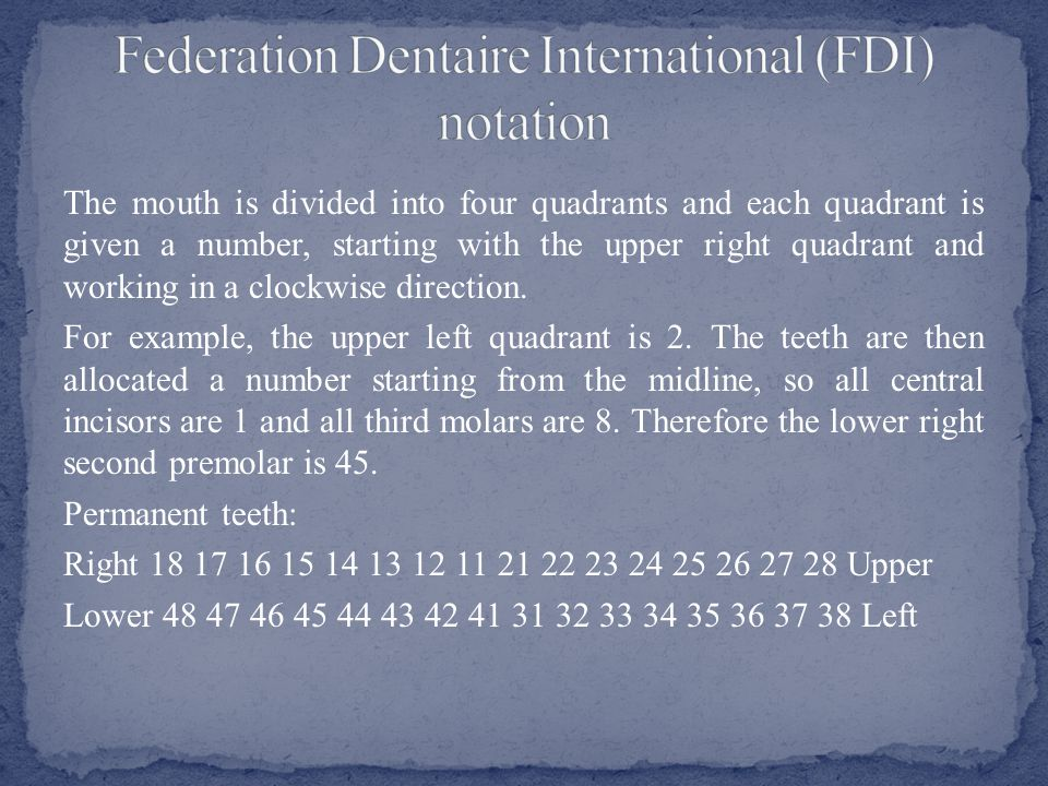 In this system, sometimes called the Tzigmondy–Palmer system, the dentition is divided into quadrants and the teeth in each quadrant are numbered 1 to 8 starting at the midline.