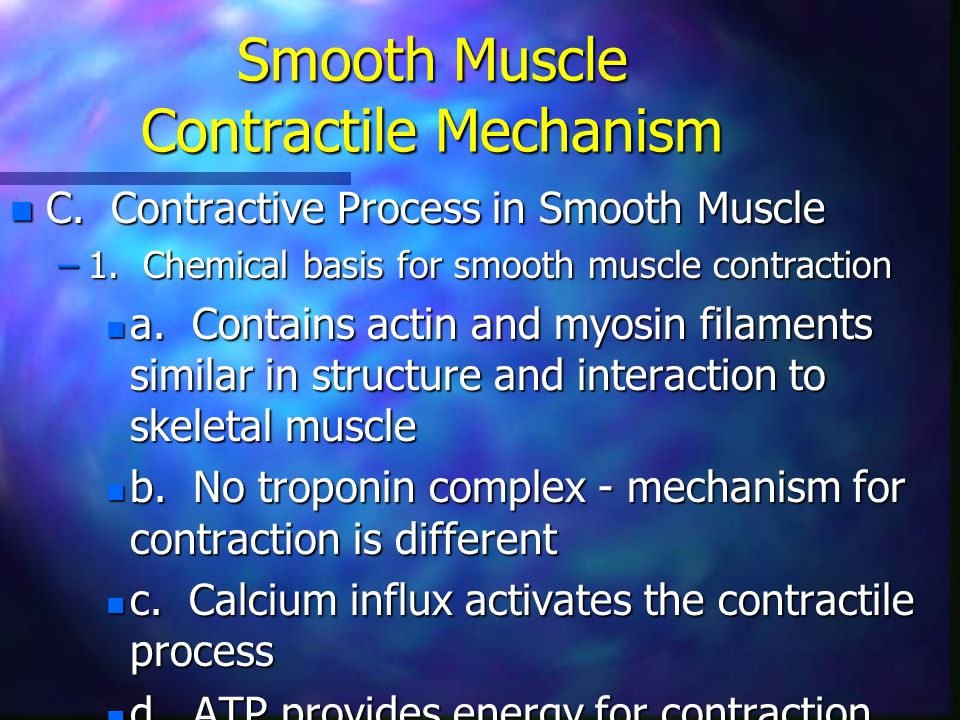 Smooth Muscle Contractile Mechanism n C. Contractive Process in Smooth Muscle –1. Chemical basis for smooth muscle contraction n a. Contains actin and