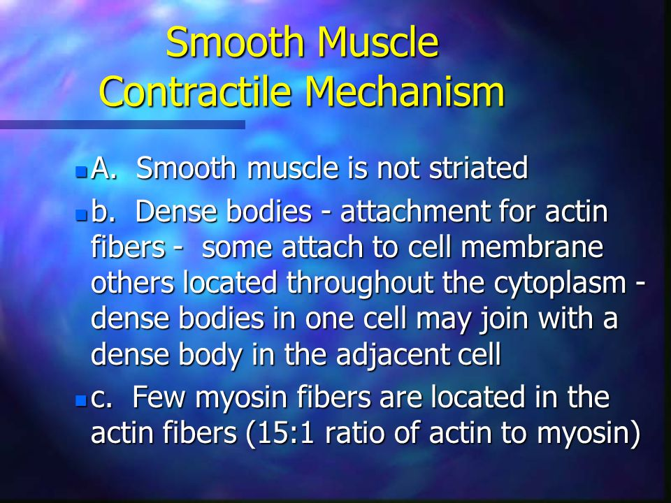 Smooth Muscle Contractile Mechanism n A. Smooth muscle is not striated n b. Dense bodies - attachment for actin fibers - some attach to cell membrane