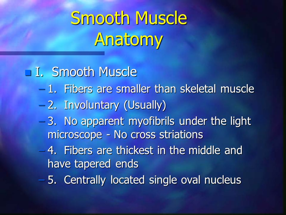 Smooth Muscle Anatomy n I. Smooth Muscle –1. Fibers are smaller than skeletal muscle –2. Involuntary (Usually) –3. No apparent myofibrils under the li