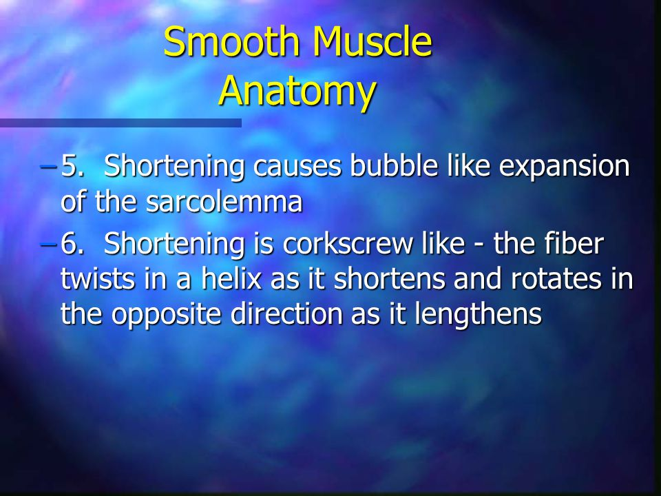 –5. Shortening causes bubble like expansion of the sarcolemma –6. Shortening is corkscrew like - the fiber twists in a helix as it shortens and rotate