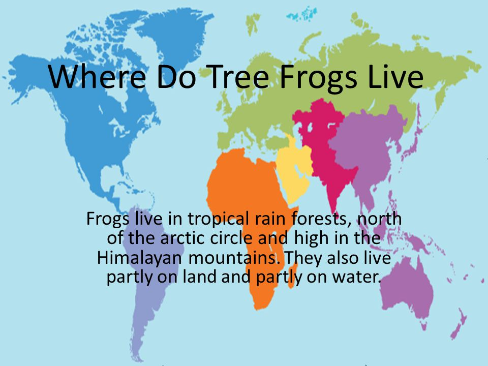Is A Tree Frog A Herbivore Carnivore Or Omnivore.Tadpoles are herbivores because they eat algae.