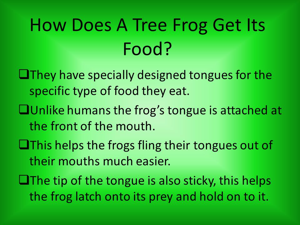 How Did The Tree Frog Become Endangered.