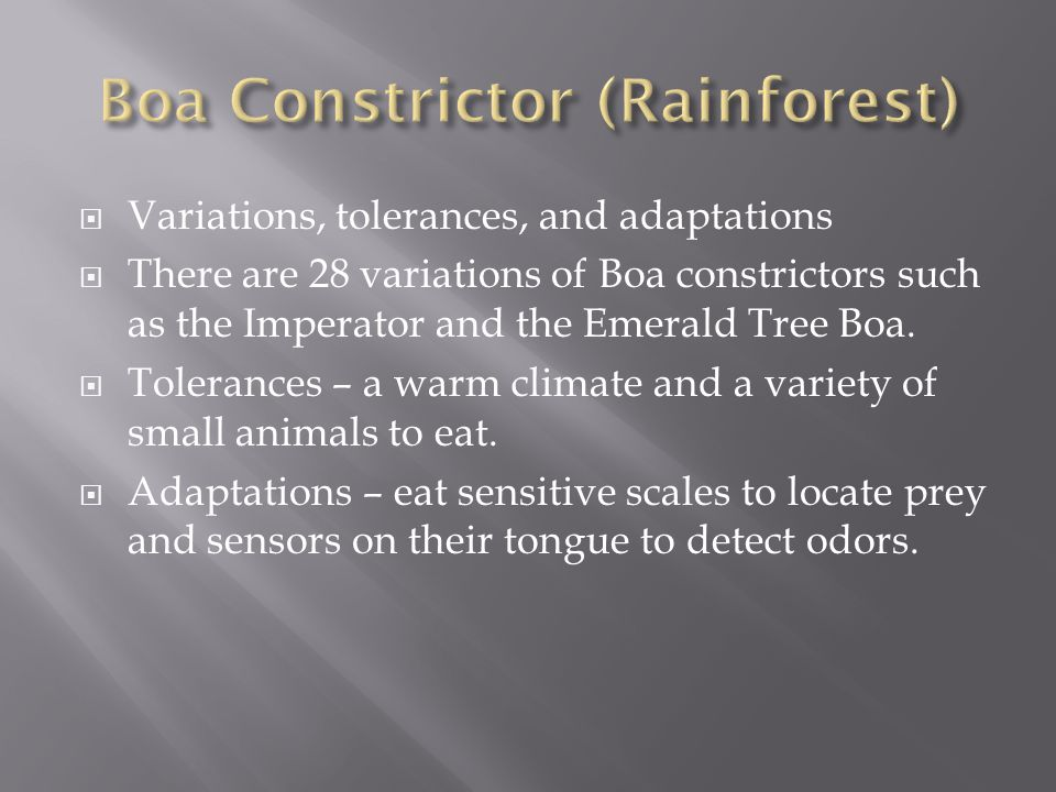  Variations, tolerances, and adaptations  There are 28 variations of Boa constrictors such as the Imperator and the Emerald Tree Boa.  Tolerances –