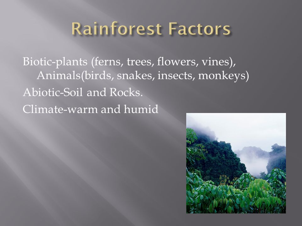 Biotic-plants (ferns, trees, flowers, vines), Animals(birds, snakes, insects, monkeys) Abiotic-Soil and Rocks. Climate-warm and humid