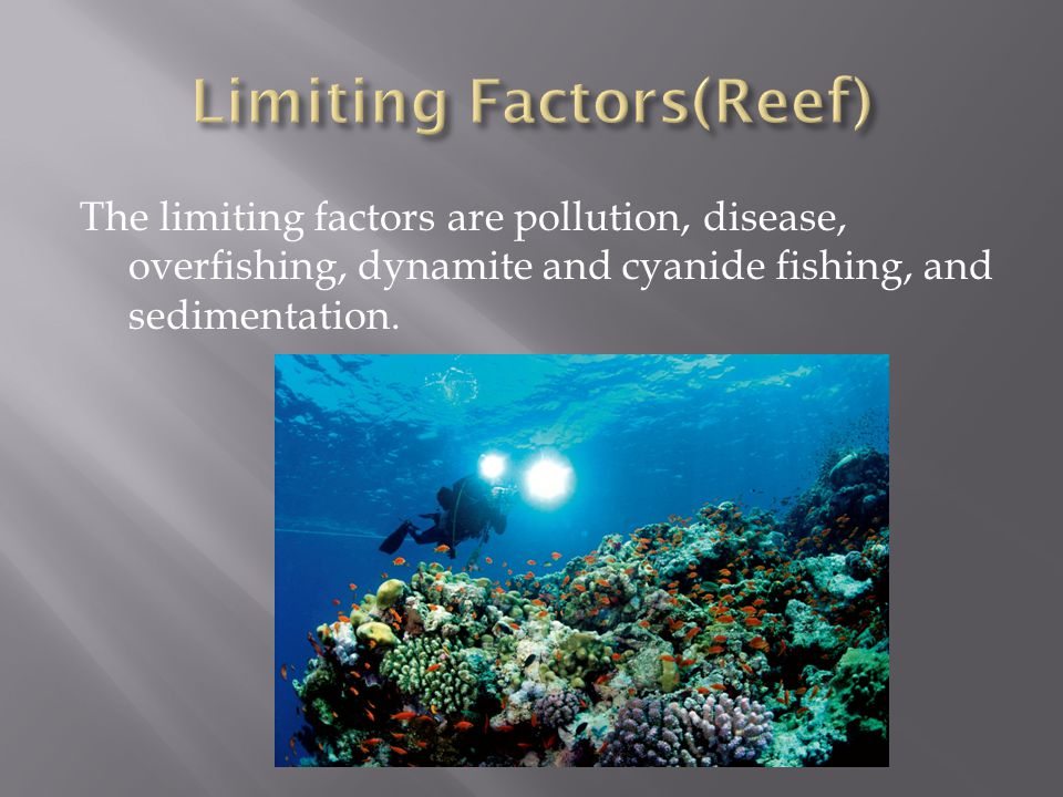 The limiting factors are pollution, disease, overfishing, dynamite and cyanide fishing, and sedimentation.