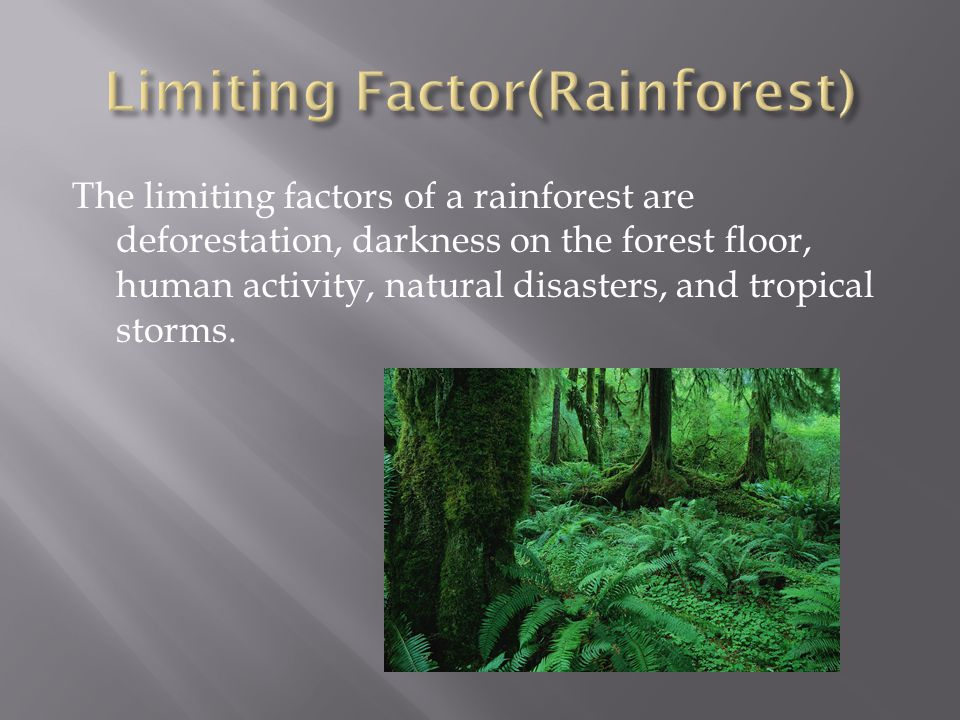 The limiting factors of a rainforest are deforestation, darkness on the forest floor, human activity, natural disasters, and tropical storms.