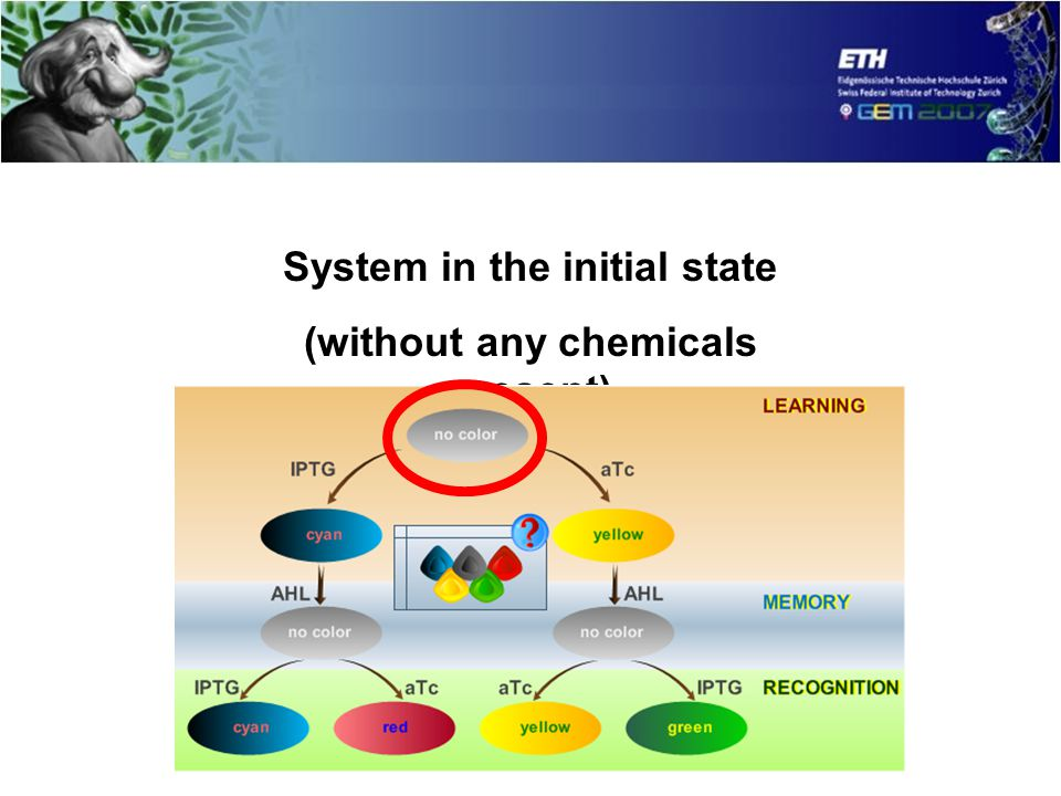 System in the initial state (without any chemicals present)