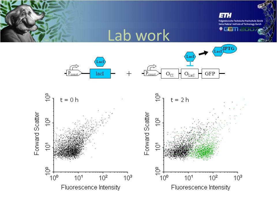 Lab work P const lacI P const O LacI O CI GFP + LacI IPTG LacI