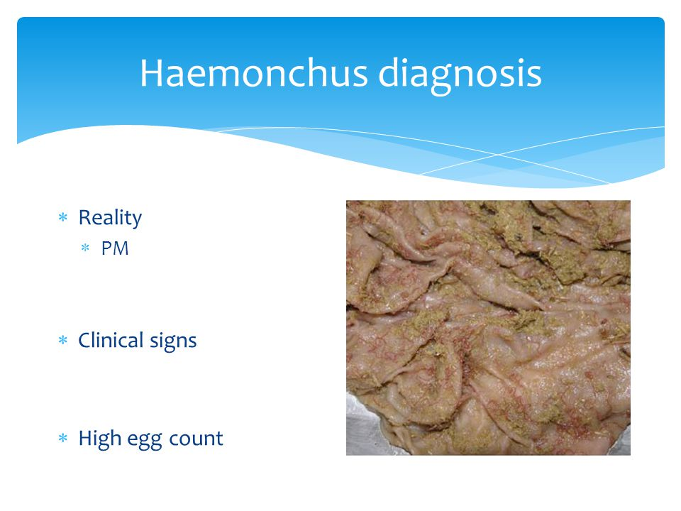 Haemonchus diagnosis  Reality  PM  Clinical signs  High egg count