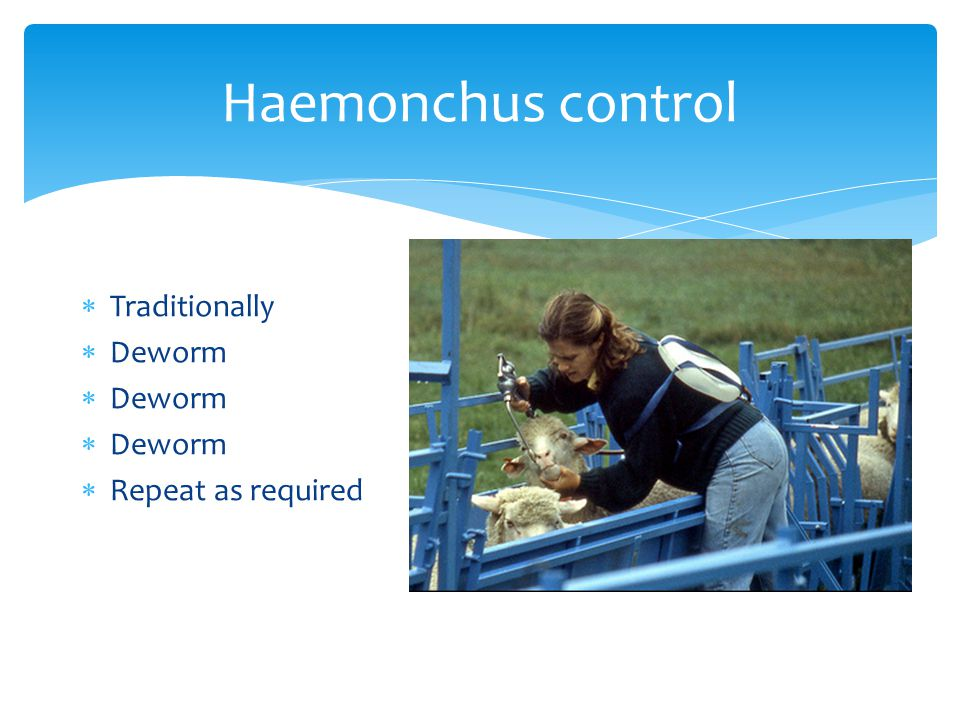 Haemonchus control  Traditionally  Deworm  Repeat as required