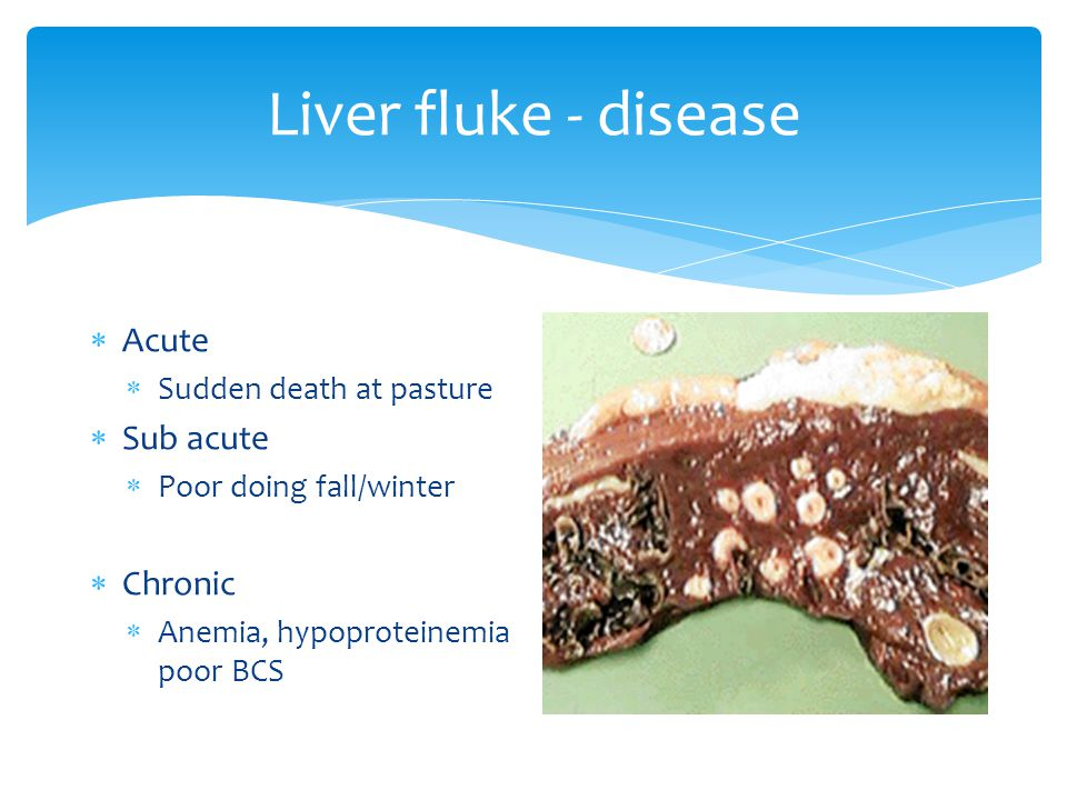 Liver fluke - disease  Acute  Sudden death at pasture  Sub acute  Poor doing fall/winter  Chronic  Anemia, hypoproteinemia poor BCS