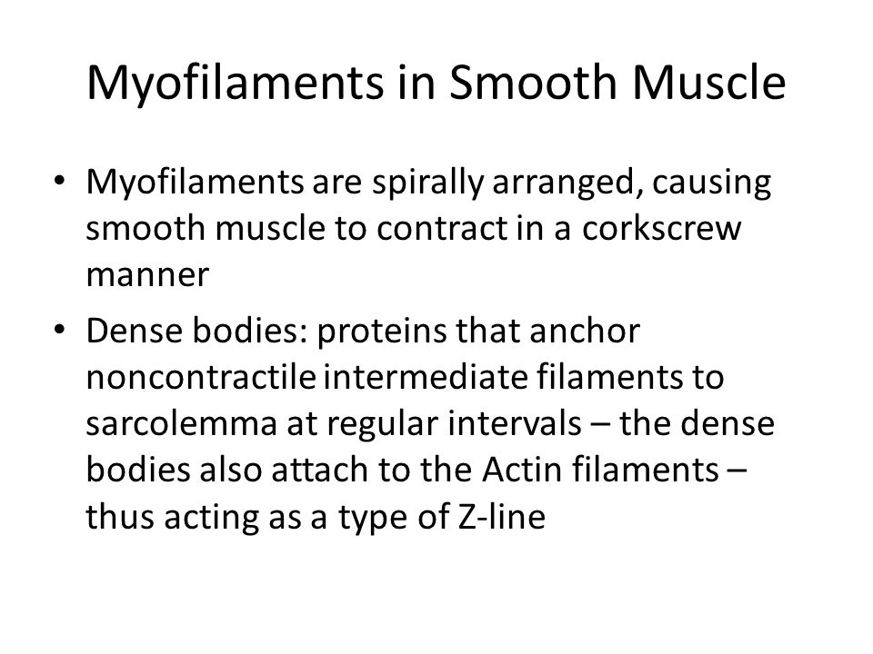 Myofilaments in Smooth Muscle Myofilaments are spirally arranged, causing smooth muscle to contract in a corkscrew manner Dense bodies: proteins that anchor noncontractile intermediate filaments to sarcolemma at regular intervals – the dense bodies also attach to the Actin filaments – thus acting as a type of Z-line