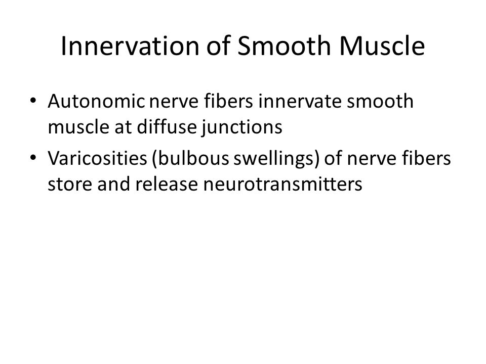 Innervation of Smooth Muscle Autonomic nerve fibers innervate smooth muscle at diffuse junctions Varicosities (bulbous swellings) of nerve fibers store and release neurotransmitters