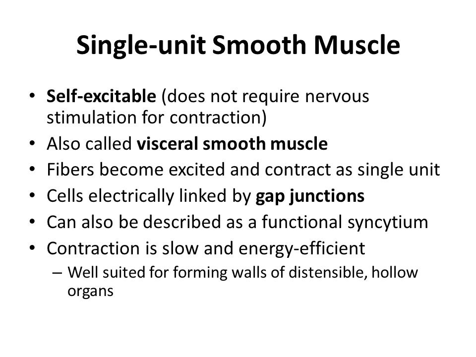 Single-unit Smooth Muscle Self-excitable (does not require nervous stimulation for contraction) Also called visceral smooth muscle Fibers become excited and contract as single unit Cells electrically linked by gap junctions Can also be described as a functional syncytium Contraction is slow and energy-efficient – Well suited for forming walls of distensible, hollow organs