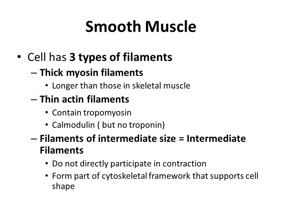 Smooth Muscle Cell has 3 types of filaments – Thick myosin filaments Longer than those in skeletal muscle – Thin actin filaments Contain tropomyosin Calmodulin ( but no troponin) – Filaments of intermediate size = Intermediate Filaments Do not directly participate in contraction Form part of cytoskeletal framework that supports cell shape