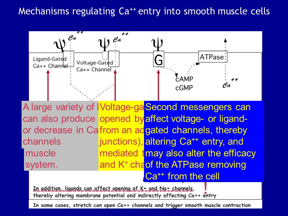 Summary: Smooth vs Skeletal Muscle