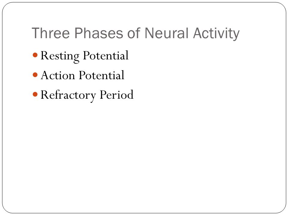 Three Phases of Neural Activity Resting Potential Action Potential Refractory Period