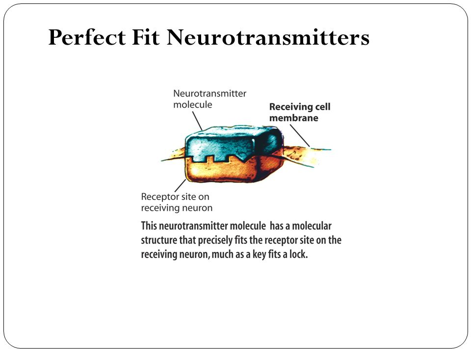 Perfect Fit Neurotransmitters